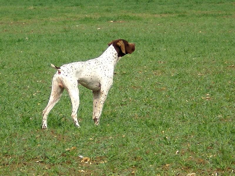 le clos Renaud dressage de chien somme picardie